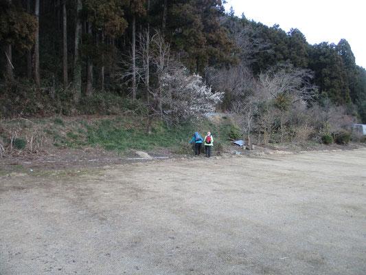 帰路のバス停にて 楽しかった山行もこれで終わりです でもバスを待っている時、庭の向こうに捨てられた柚子の木を目ざとく見つけて行った人がいました