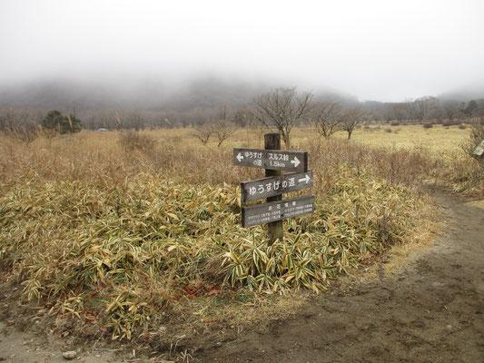 下山して湿原を歩いて駐車場に戻ります 「ゆうすげの道」とありますが、この榛名湖畔でゆうすげをまだ見たことがありません
