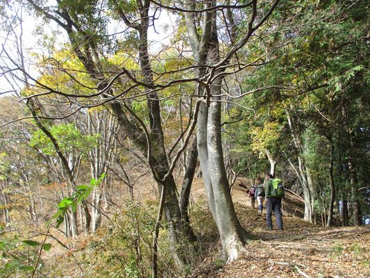 笹尾根の秋5