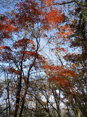 笹尾根の秋9