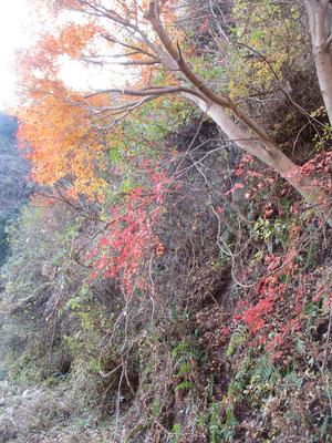 林道沿いでも紅葉が美しい