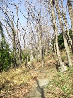 雑木の園内 落ち着いた散策路