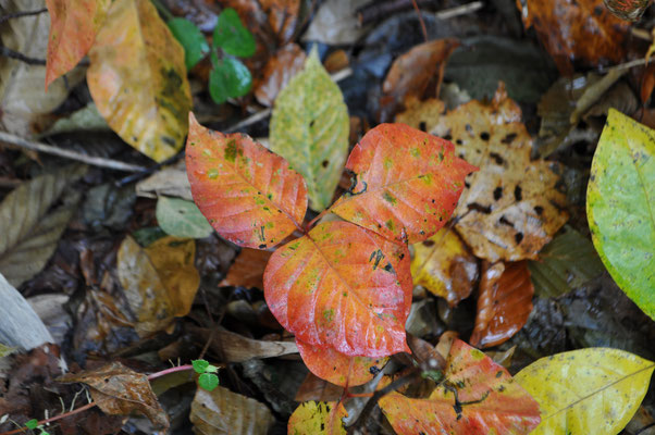 秋色の下山13
