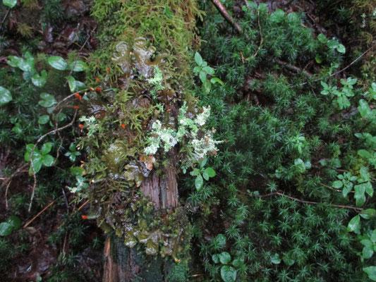 苔も生き生き