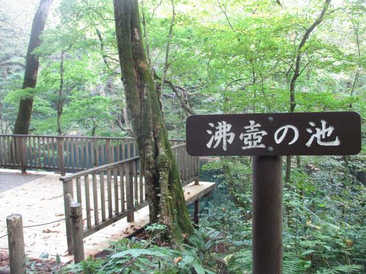 散策コースを辿り終盤「沸壺の池」へ