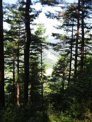 赤松の樹間から下の村が見えます 随分登りました