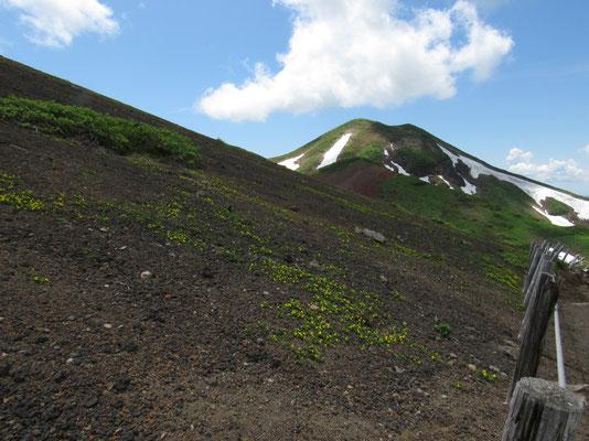 男女岳をバックにタカネスミレの咲く焼岳の斜面