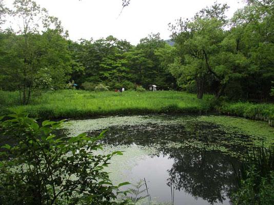 周囲の山からの水で池がみたされています