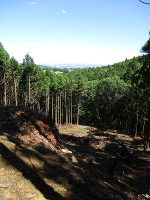 皆伐されている箇所から、都会の景観が望めます