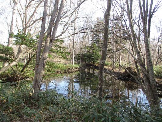 雰囲気のよい小沼散策
