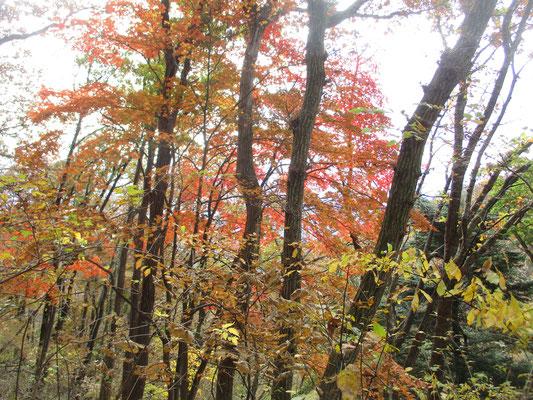 笹尾根の秋8