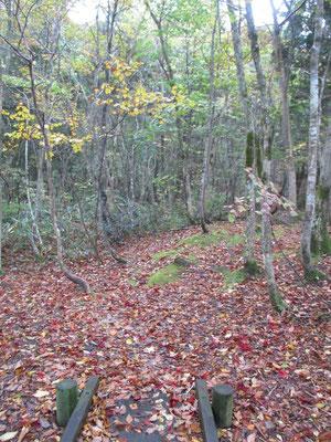色とりどりの落ち葉で埋め尽くされた散策路