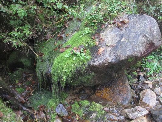 美しい苔の岩