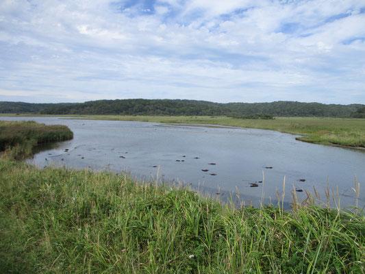霧多布岬の後、幌戸(ぽろと)へ足を伸ばしました ここの沼の向こう岸には一見宿「ぽろと案内舎」というのがあります