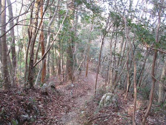 下山は気持ちのよい照葉樹林の中を行きます