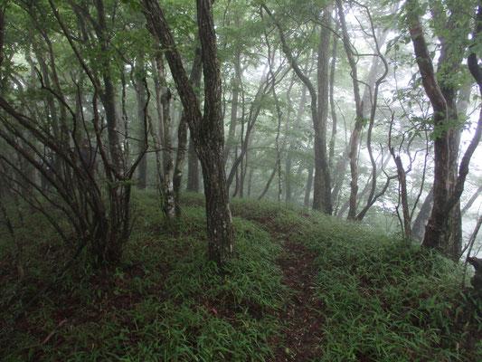 夢のなかで歩いたことがありそうな山の路