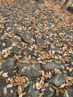 石畳の落ち葉