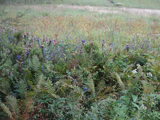 一面青だったであろうリンドウも今は茶色に… これもまた美しい色の世界