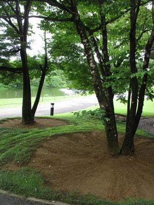美しく掃き清められた樹下