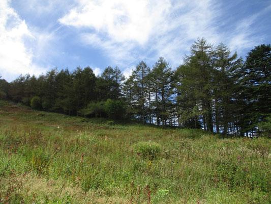 青空が見えてきた湿原からの登り 山頂に向かう途中