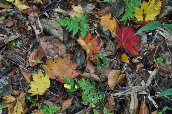 秋色の下山14