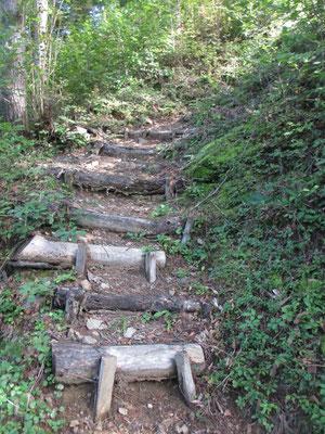 その急登 地元の里山らしく、それなりに段が付けられていて登りやすくなっていました