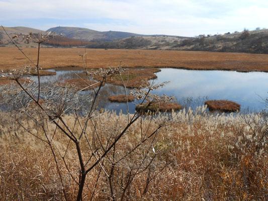秋のシシウドと池塘