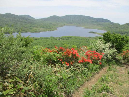 レンゲツツジとズミの花が咲き乱れる雄国山山頂から沼を見下ろす