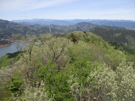 淡い新緑の山稜