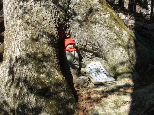 急降下の途中に大きなモミの木があります その足元の洞に、以前、会でお地蔵様を安置しました 名付けて「モミの木地蔵」 赤い帽子やマフラーは会員の手作りで時々お召し替えもして差し上げてます