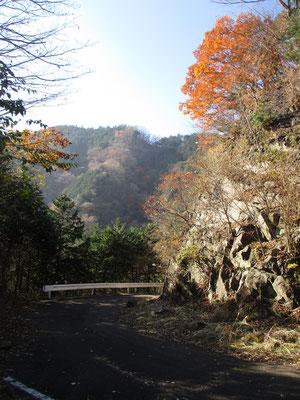 林道沿いにはカネハラニシキガイの化石が出る岸壁がある