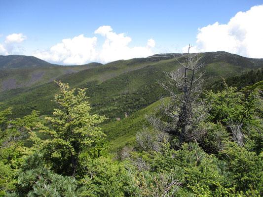 八ヶ岳を南(アルペンチックな登山)と北(樹林帯の彷徨)に分けますが、これはまさに北八ヶ岳を象徴する景観