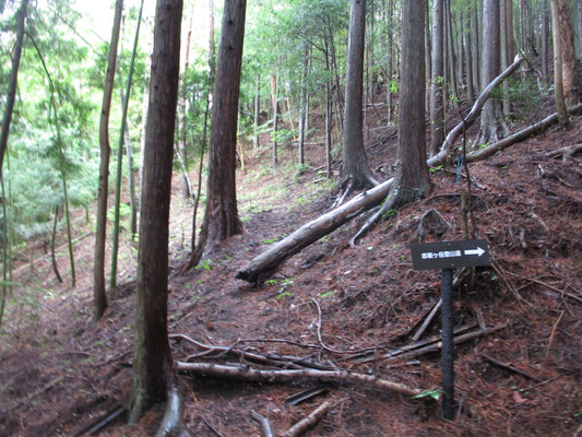 登山口の看板 最初はスギの植林帯