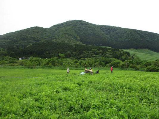 小塚山をバックに湿原の手入れをしているボランティアの方たち