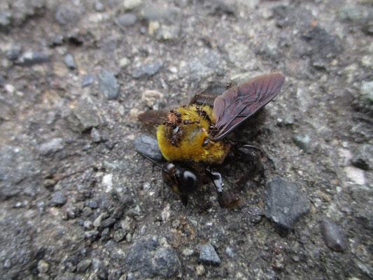 蟻ん子がいっぱいついている