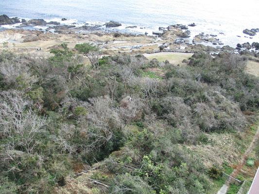 真下の白浜の海際の植生も被害が見える