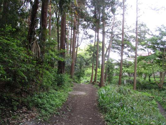 その湧水の方から南に向かっての遊歩道を進みます まだ左手方面は伐採のない箇所 従来どおりの緑の様子が残っています