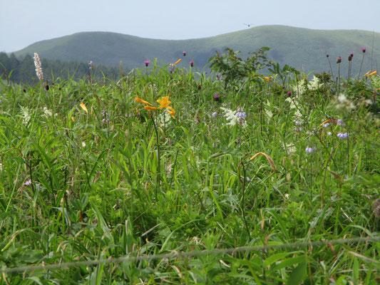 花畑はすでに秋の花に移行していた 背景の山はカボッチョ
