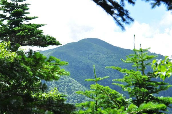 塩見小屋に向かう途中にある本谷山 こうした山を一つ二つと超えながらアップダウンを繰り返します