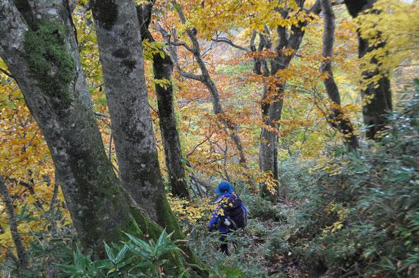 秋色の下山5