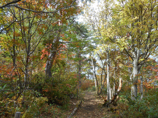 旭山への道