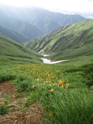 大日岳山頂下から見下ろした雪渓の谷 ニッコウキスゲが咲き乱れる