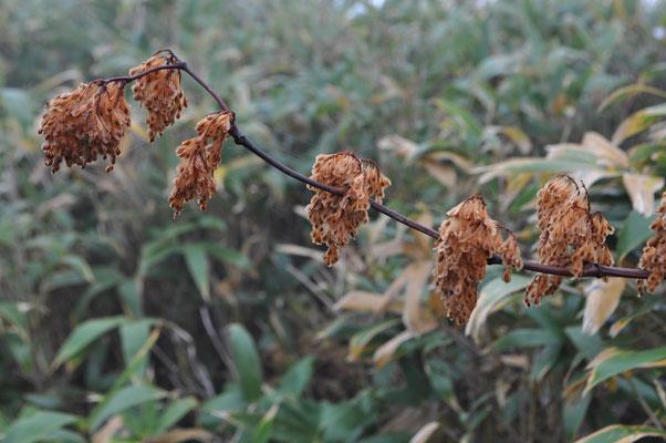 枯れた植物3