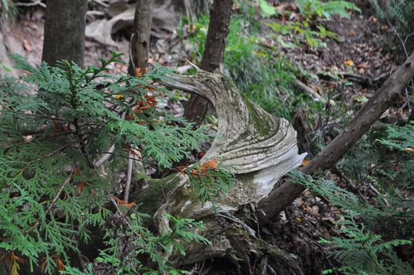 ヘラジカの角のような木のオブジェ