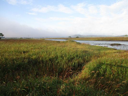 朝日が差して明るく色を帯びてきた湿原