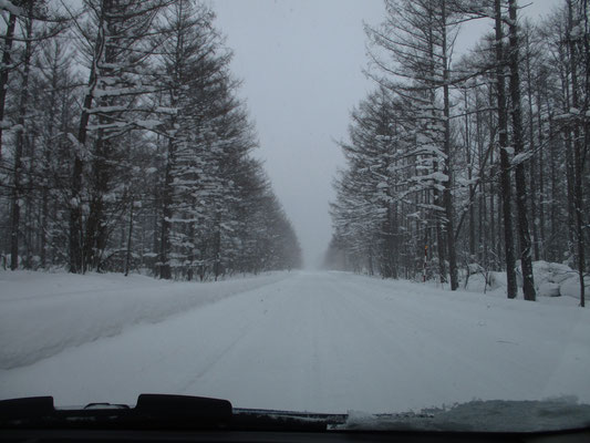 真っ白な空に向かってつづく白い道 樹林を抜け遮るものがなくなると急にホワイトアウトの世界となり緊張します