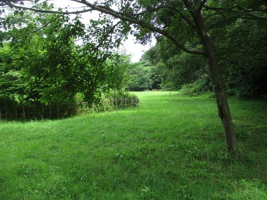 広々とした緑地内 きれいに整備されている
