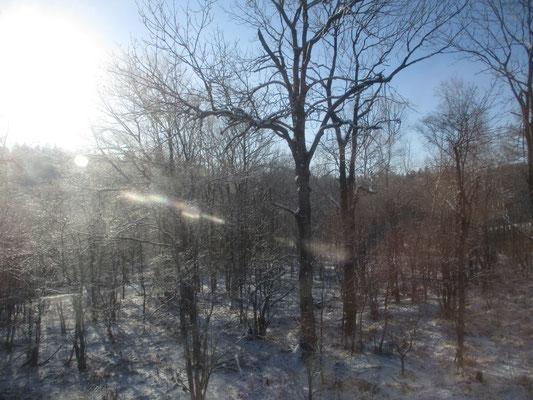 日が高くなってくると、枝々の霧氷も消えていってしまう