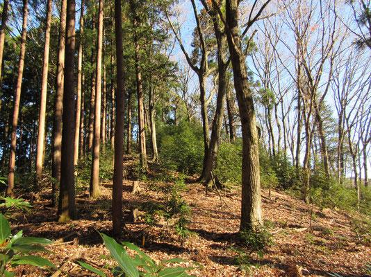 植林帯の急登の向こうにはこんな広々した空間がありました