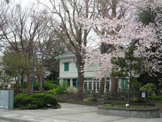 エリスマン邸と桜